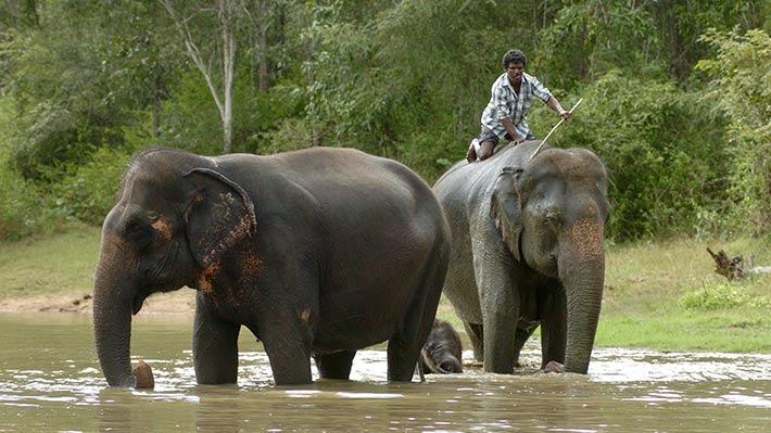 ElephantsStory710