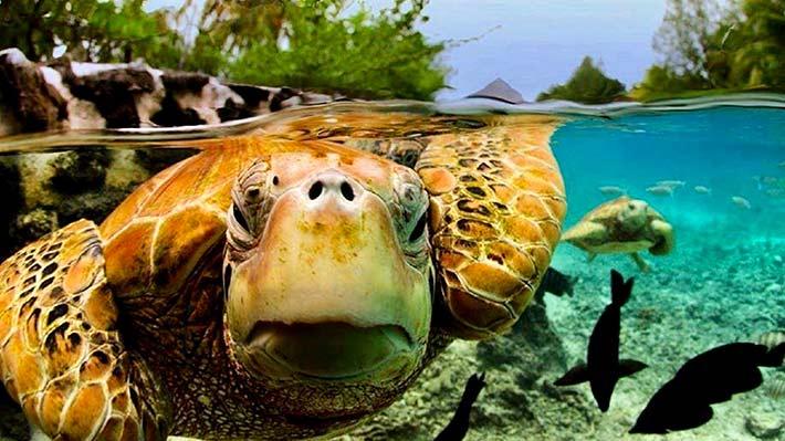 Turtle2 710